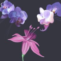 Orchids by Icarus667