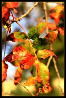 It's fall 3 by ShlomitMessica