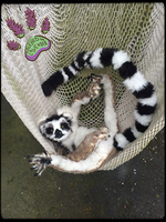 SOLD!!! RECYCLED CLOTHING TBL poseable Lemur by TouchedbyLavender