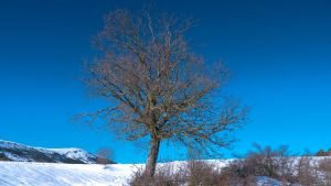 Tree in the snow-Causol Grasse by fabien-felix