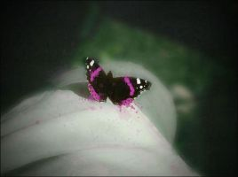 pink butterfly by ieu1