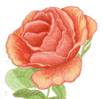 Roseblossomcropped2 moderate by cLynnDesignsMG