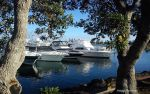 Harbour Through The Trees by butterfly-V