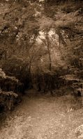 forest by ArisAnthopoulos