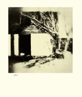 iPhoneography  Lignify by Gerald-Bostock