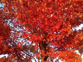 Leaves of Red by knowthyself89