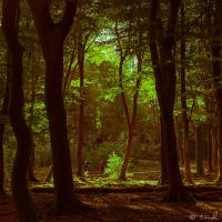 Into The Woods by tvurk