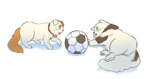 Soccer Cats by marimo-lover