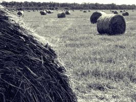 Memories by AllegnaPhotography