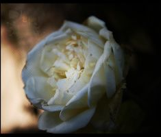 Photography3 by bast0s