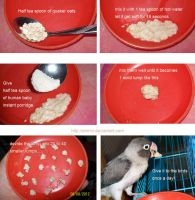 Easy to make, nutrious lovebird treat by emmil