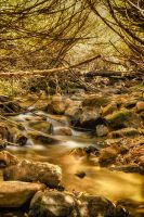 River of Gold by mjohanson