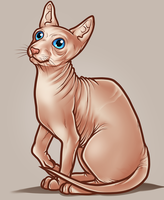 Sphynx Cat by Dragoart