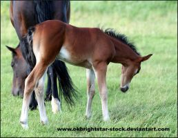 Friendly Mare Foal 7 by okbrightstar-stock