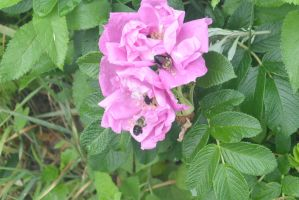 The Bee Gathering, Nectar Love 14 by Miss-Tbones