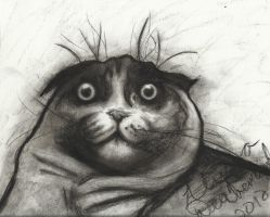 Waffles the Cat - Charcoal Sketch by lyssagal