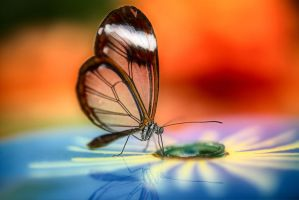 Dance of butterfly on the glass 2 by Witoldhippie