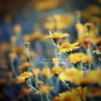The story of yellow by ahmedwkhan