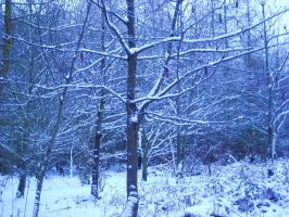 cold snowy trees by loobyloukitty
