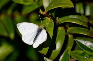 White Wings by Momenti-Photo