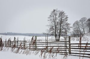 Horse pasture by eswendel