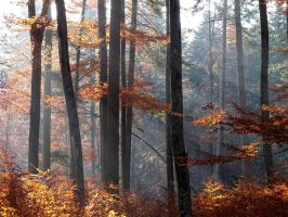 Autumn Forest 5 by helice93