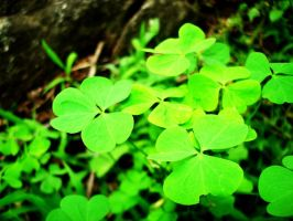Clovers by ultimately-epic