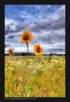 tres-flores HDR by danielitolikable