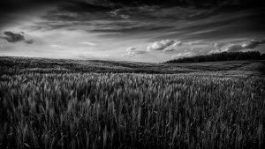 Ostholstein in July by antarialus