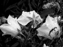 Bruised in the rain by flamingamber