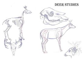 deer studies by Edenfur