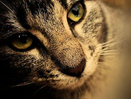 whiskers and contrast. by linduh