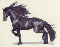 Friesian by Ryer-Ord-Star