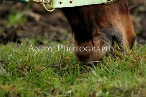 Horse by Anjoy-Photography