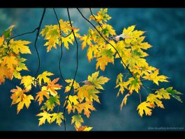 fall season by Iulian-dA-gallery
