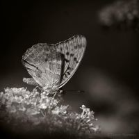Pollen party... by ThierryV