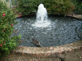 Fountain and ducks by PhotographicJaydiee