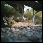 cat 4 by mikeb79