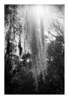 2015-046 Charles Towne Landing - Spanish Moss by pearwood