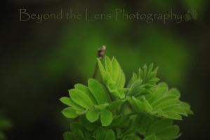 New Spring Leaves by TearsofEndearment