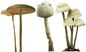 mushroom 12 13 14 png by gd08