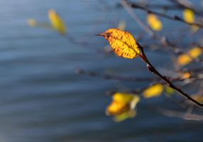 The Fall by anneclaires