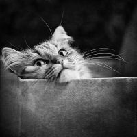 Cat Trap II by StacyD