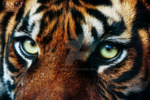 Eye of the Tiger by Esveeka