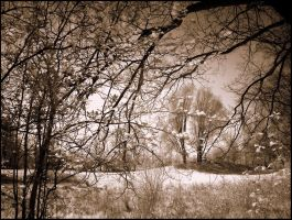Wolni Tree infrared... by MichiLauke