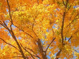 colors of fall II by jkegler23