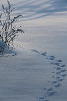 paws prints in the snow by WhiteSpiritWolf
