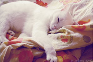 sleeping cat by prince-Axel