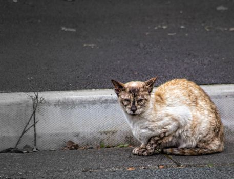 Cat of the street by DaveJones-Photograpy