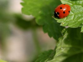 At the edge of the leaf by Numede